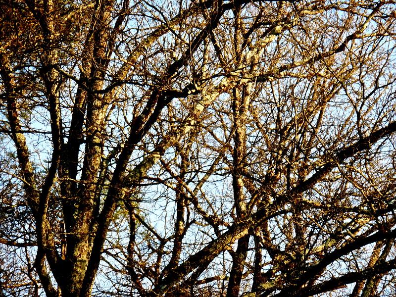 Des arbres au hasard