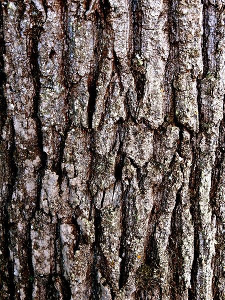 Peau d'arbre