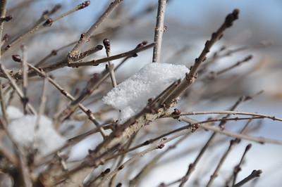 Let it Snow...Feb 21 2013