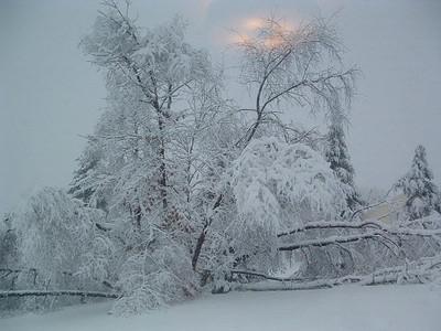 Let it snow!!!!!