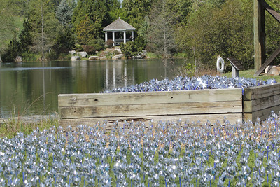 4,000 pinwheels -  April is child abuse prevention month