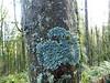 Linnton Trail - Forest Park - Oregon - December 13, 2016