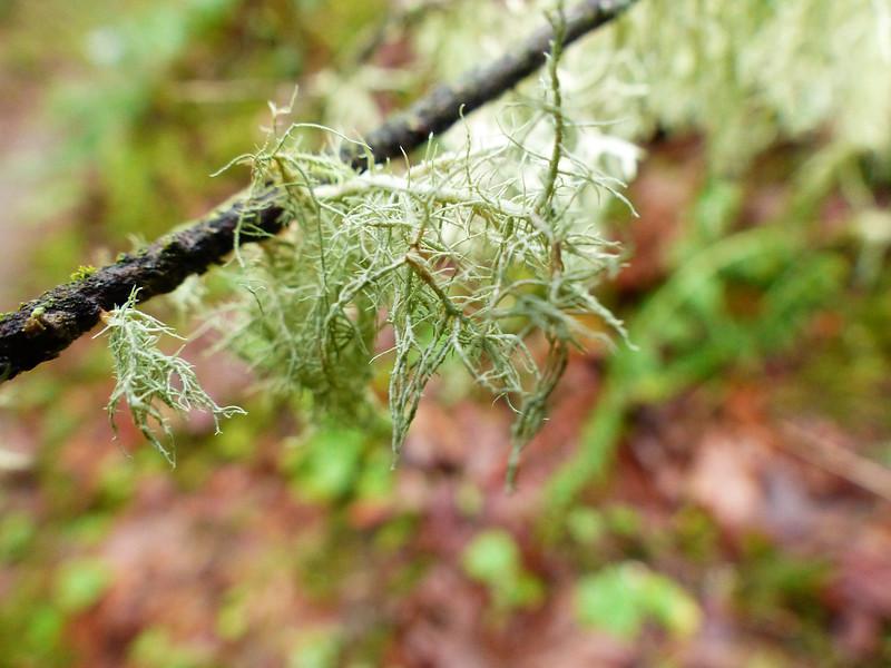 Found on the Linnton Trail - Forest Park Oregon - December 13, 2016