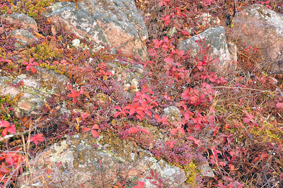 Autumn on the Precambrian Sheild