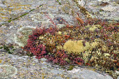 Biodiversity, Mosses and Lichens Growing on Bedrock