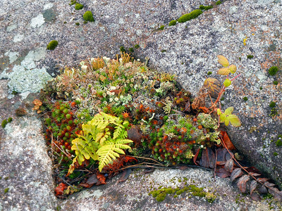 Lichens, Mosses, and Fern Growing on Rocks