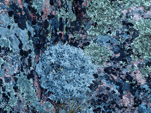 Lichens Growing On Igneous Bedrock