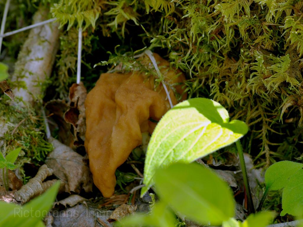 Growing Fungi