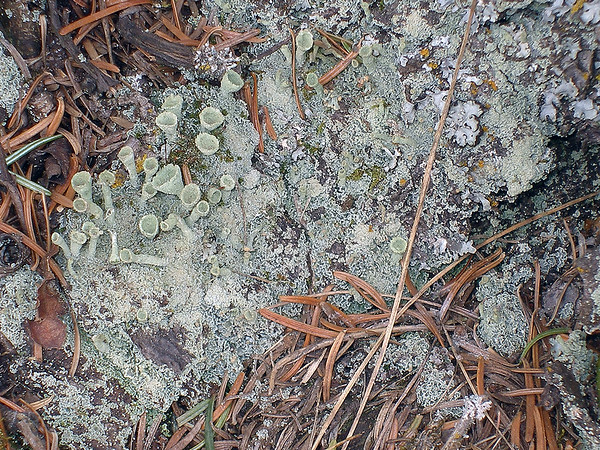 Lichens Growing in The Forest