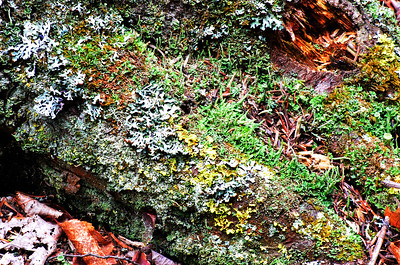 Lichen Community Growing