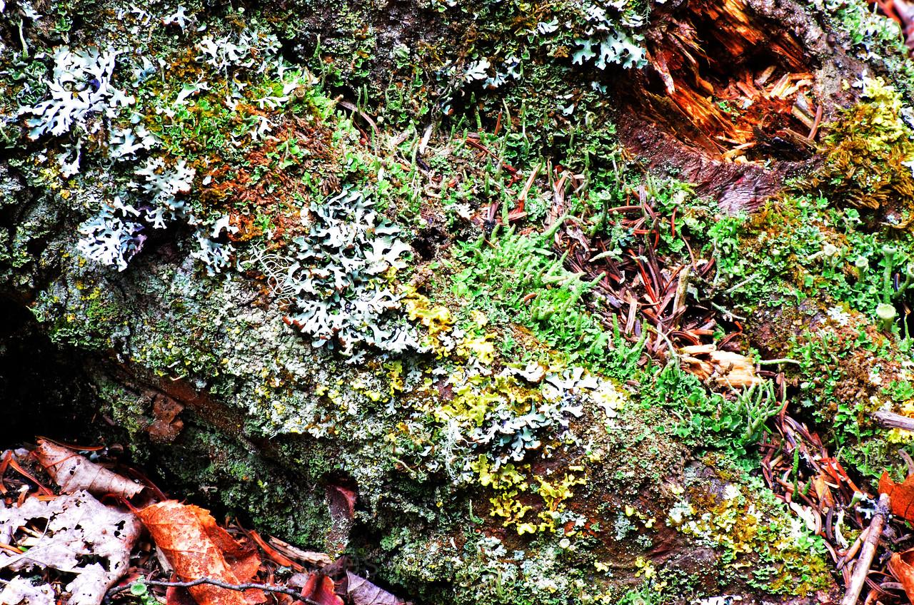 Lichen Community Growing