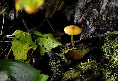 Mushroom Growing Wild