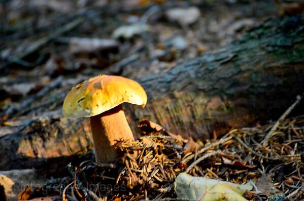 Mushroom, Growing, 2018