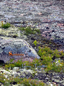 Lichens Growing on Bedrock