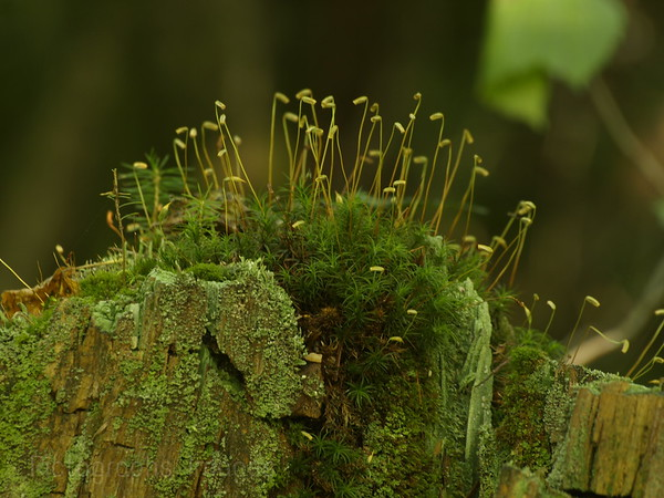 Mossy Stump Boreal Forest