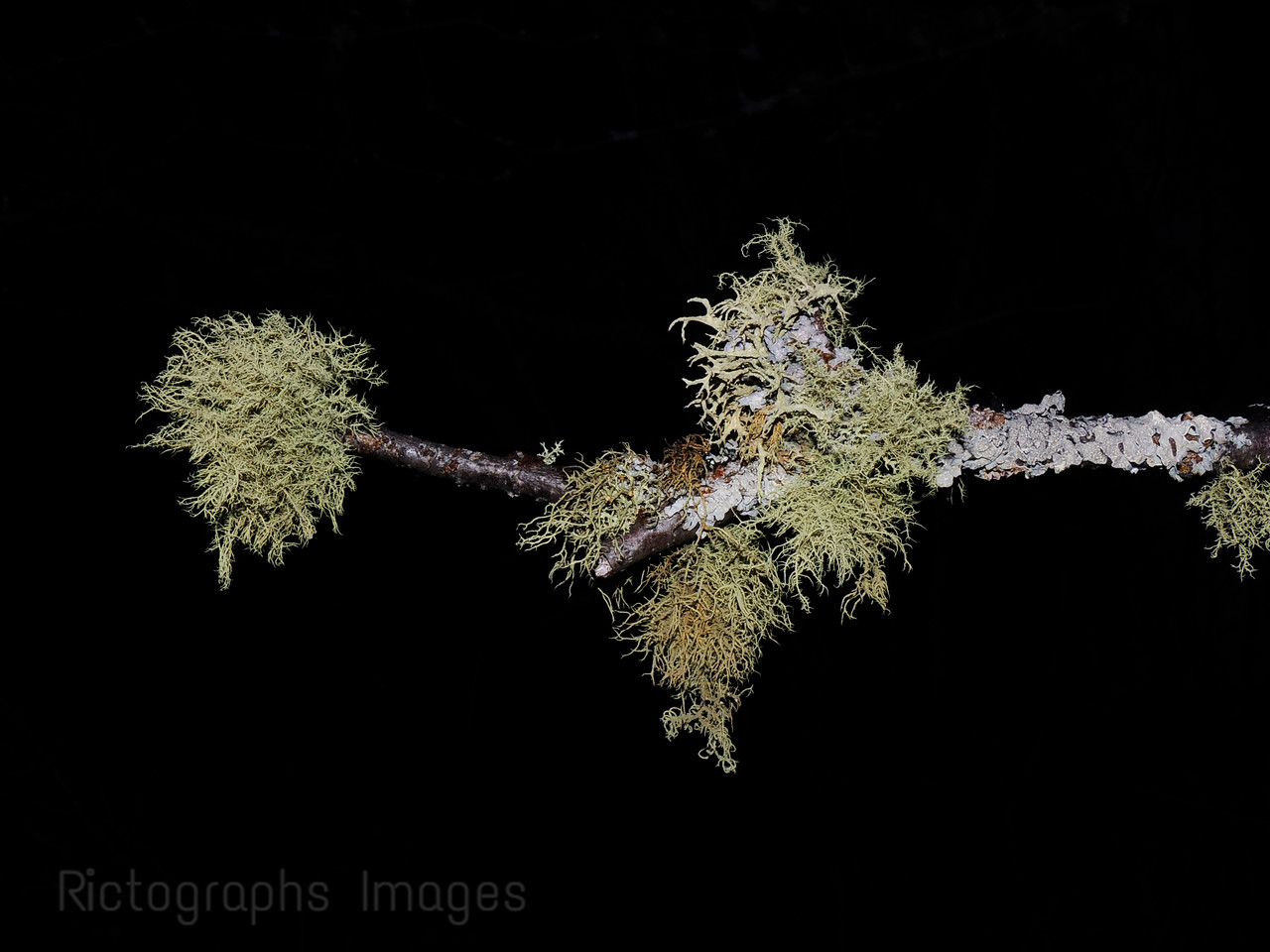 Growing Lichens