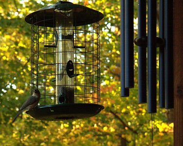 Wind Chimes and Bird Feeder