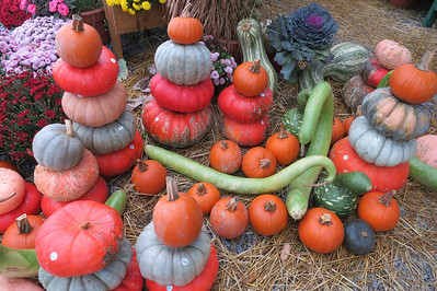 Colorful gourds in the Finger Lakes