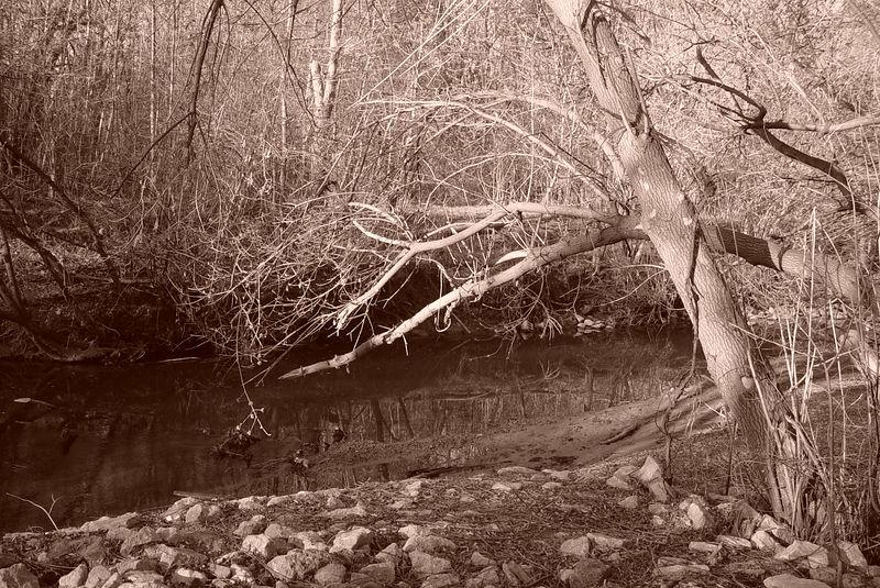 A Thirsting Tree