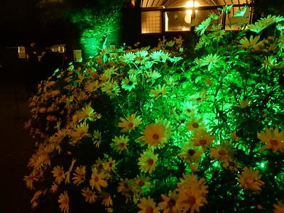Light in Sofiero -15