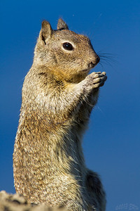 'Yessh!  Soon my plan for world domination will be complete.  MUWHAHAHA'  -Dr Squirrevil