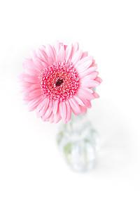 Lindsies Flowers-0022
