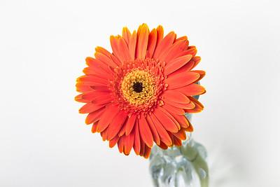 Lindsies Flowers-0007