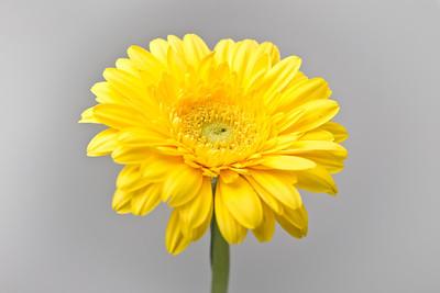 Lindsies Flowers-0038