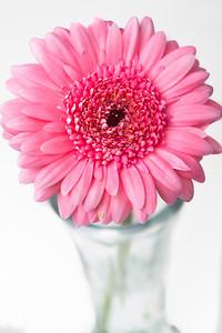 Lindsies Flowers-0026