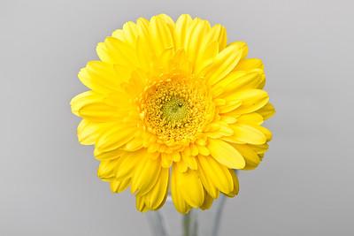 Lindsies Flowers-0031