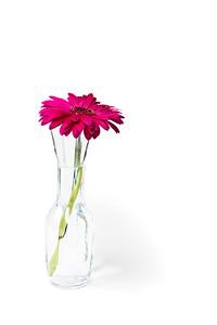 Lindsies Flowers-0019