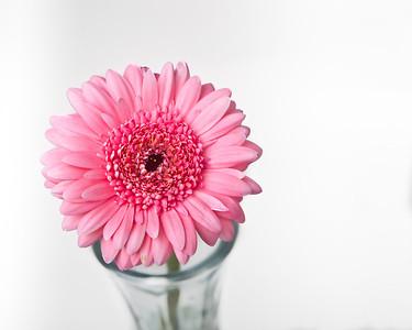 Lindsies Flowers-0028