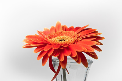 Lindsies Flowers-0012
