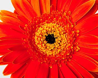 Lindsies Flowers-0008
