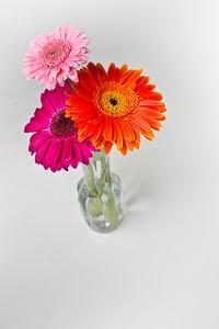 Lindsies Flowers-0040