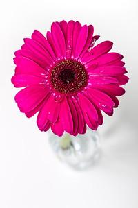 Lindsies Flowers-0015