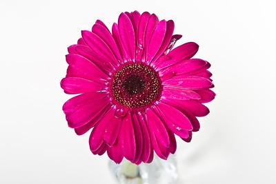 Lindsies Flowers-0014