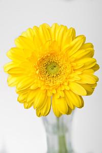 Lindsies Flowers-0030