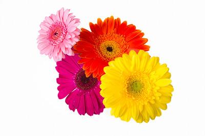 Lindsies Flowers-0044