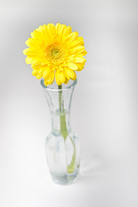 Lindsies Flowers-0032