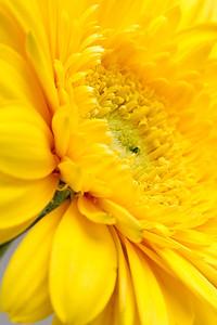 Lindsies Flowers-0039