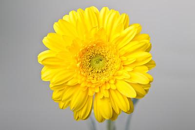 Lindsies Flowers-0037