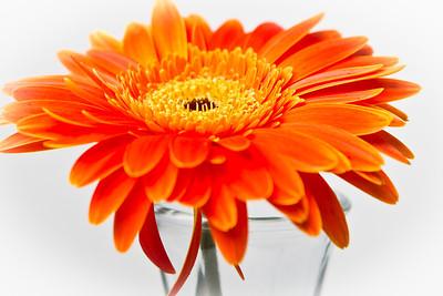 Lindsies Flowers-0013