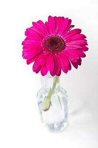 Lindsies Flowers-0016