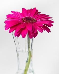 Lindsies Flowers-0018