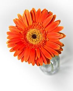 Lindsies Flowers-0010