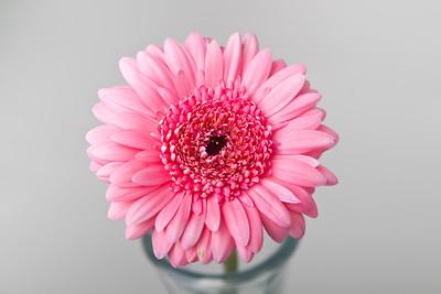 Lindsies Flowers-0027