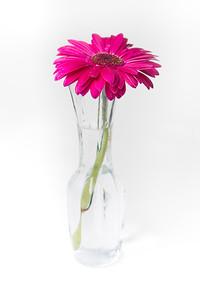 Lindsies Flowers-0017
