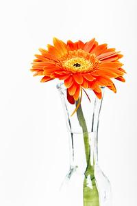 Lindsies Flowers-0003