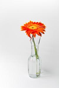 Lindsies Flowers-0011